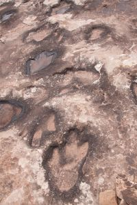 By Sandy Horvath-Dori from Grand Junction, CO, USA (Dinosaur tracks) [CC BY 2.0 (http://creativecommons.org/licenses/by/2.0)], via Wikimedia Commons