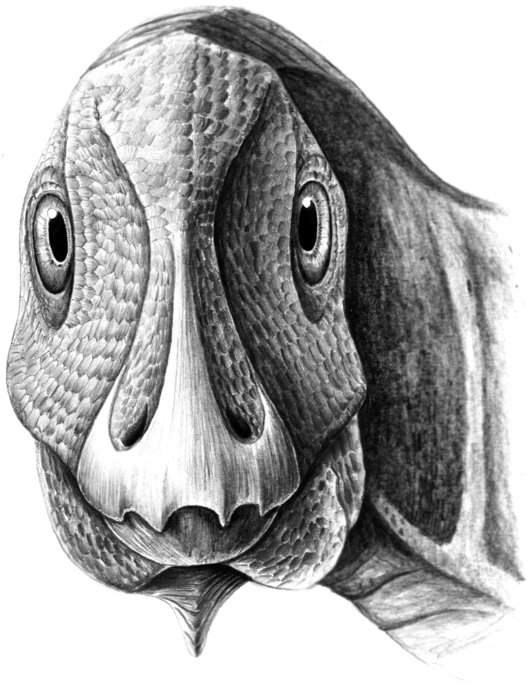Illustration of Telmatosaurus with tumor. Reconstruction by M.D. D from Dumbravă, M. D. et al. A dinosaurian facial deformity and the first occurrence of ameloblastoma in the fossil record. Sci. Rep. 6, 29271; doi: 10.1038/srep29271 (2016).