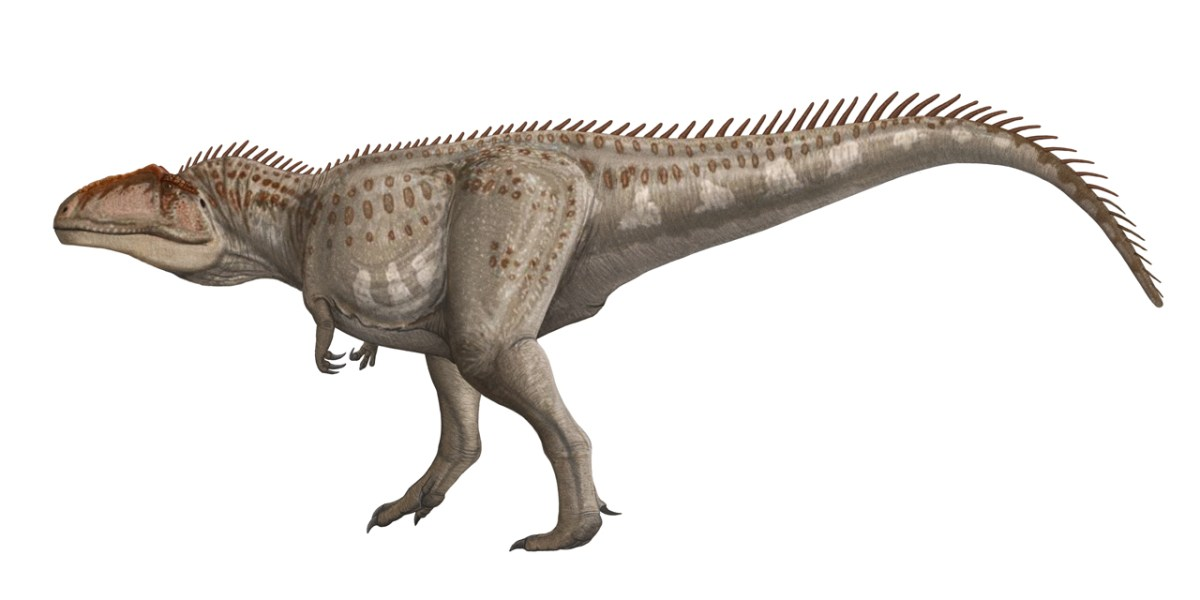 Facts About Giganotosaurus