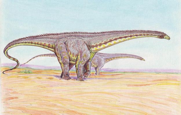 Illustrated Diplodocus