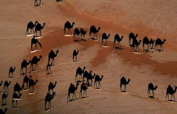 Las caravanas del desierto