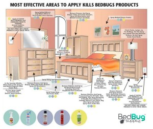 Best Product To Use For Bed Bugs