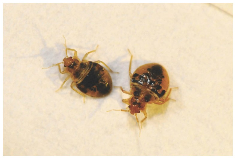 Chemicals Exterminators Use For Bed Bugs