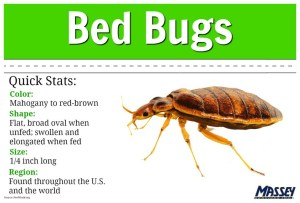 How Can I Get Rid Of Bed Bugs Myself 69