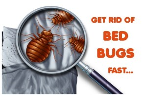 How Effective Is An Exterminator For Bed Bugs