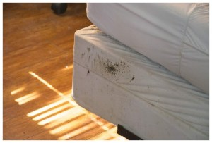 Ways To Kill Bed Bugs Fast