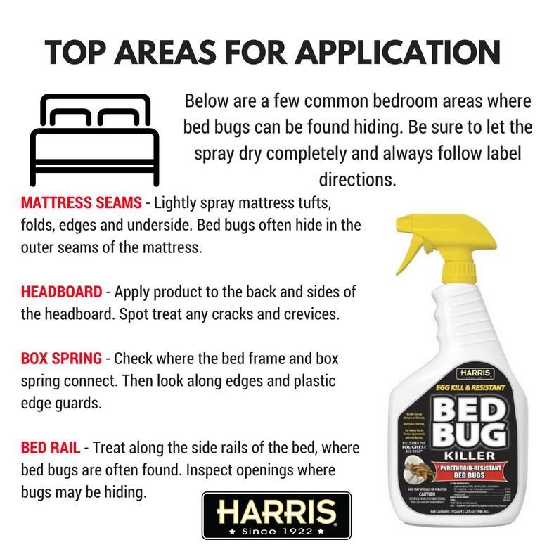What Household Chemical Kills Bed Bugs