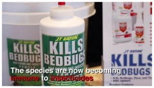 What Temperature Kills Bed Bugs In The Wash