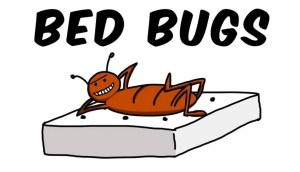 What To Use To Get Rid Of Bed Bugs