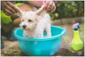 How To Get Rid Of Mites On Dogs At Home