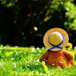 teddy-bear-797577__340