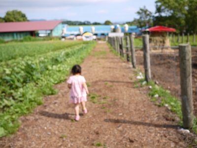 【子ども体験】夏休みの牧場