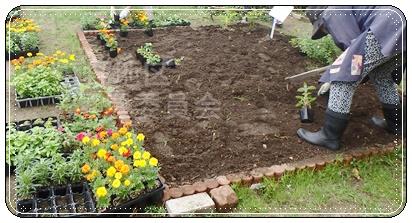 花壇植え替え2