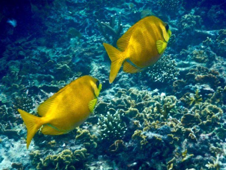 duiken-tropisch
