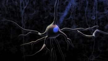 נוירונים בתוך המוח מגיבים לשיפור יכולת הלמידה.