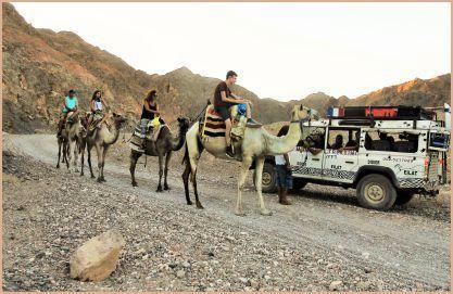 chameau dans le désert d'Eilat