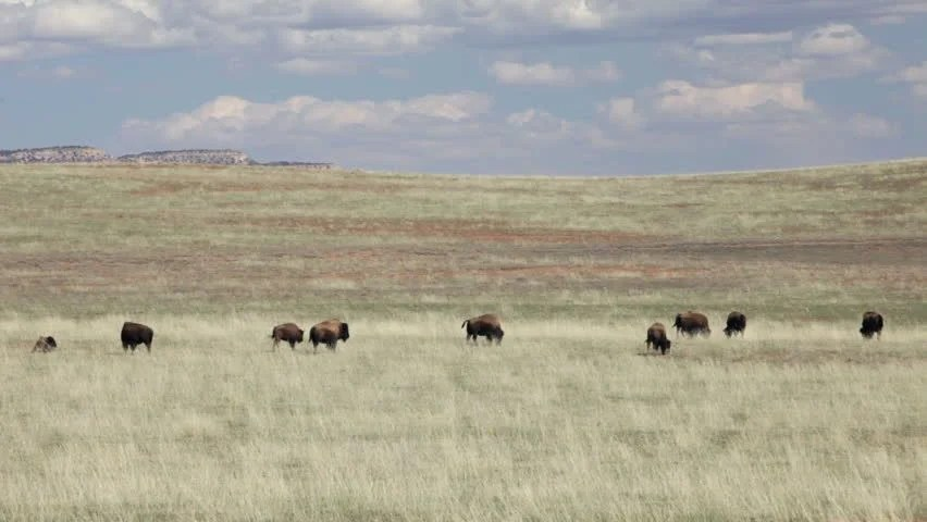 Image result for wind-blown plains
