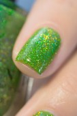 ILNP_Summer 2017 Jellies_Someday_05