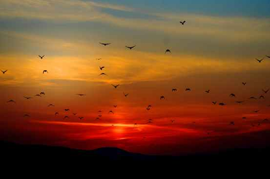 Birds flock collectivised