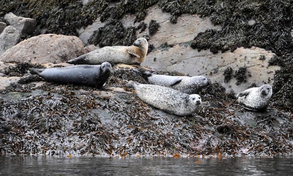 Colonie di foche lungo il tragitto verso il LOCH CORUISK