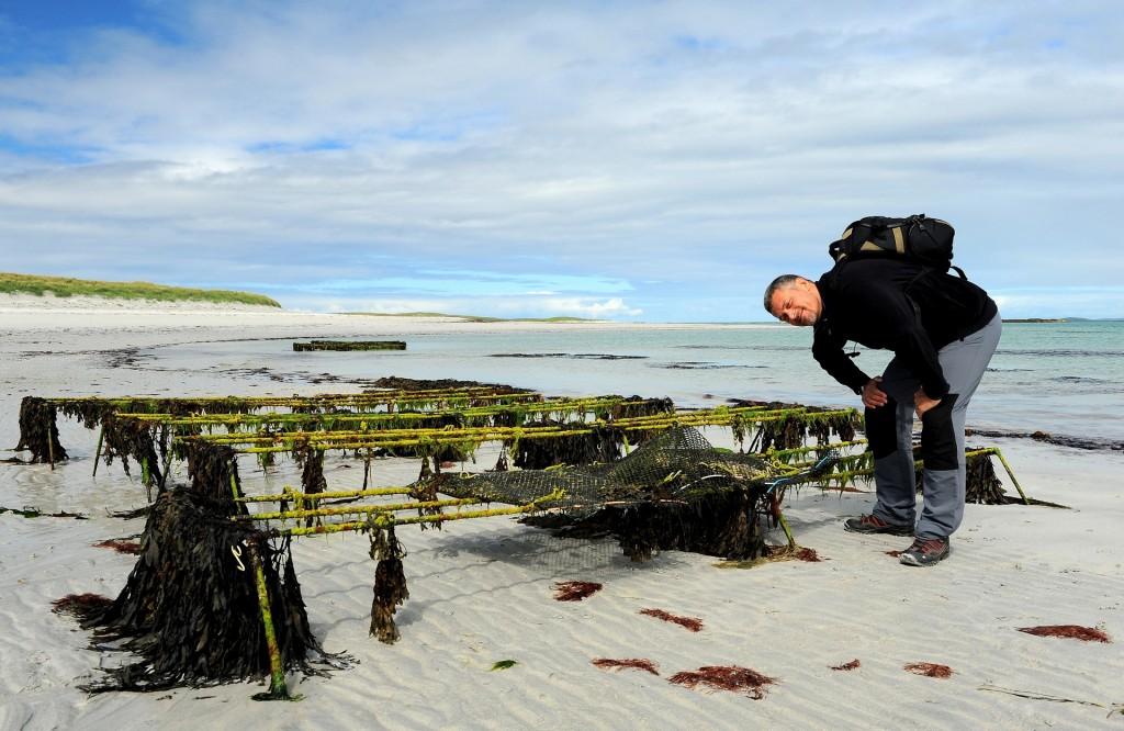 Allevamenti d'ostriche lungo la spiaggia, molto apprezzati da qualcuno di mia conoscenza!