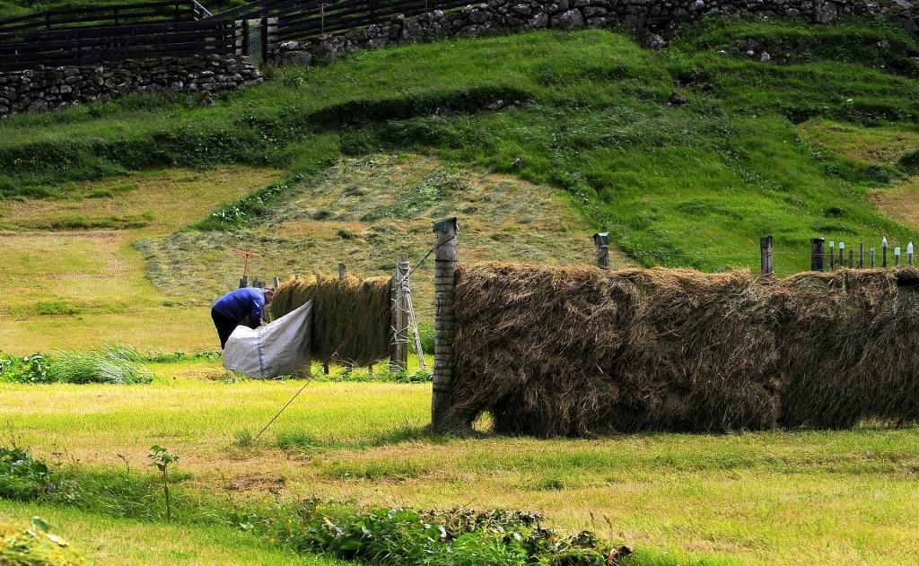 Le tipiche staccionate per mettere l'erba ad asciugare al vento e al sole
