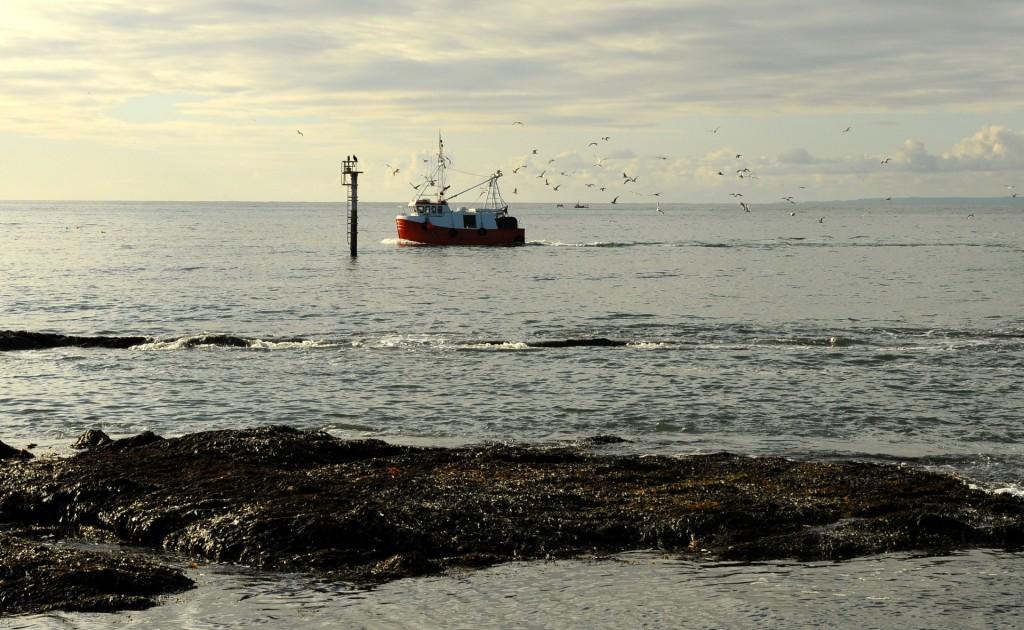 Un peschereccio che rientra dalla pesca di primo mattino