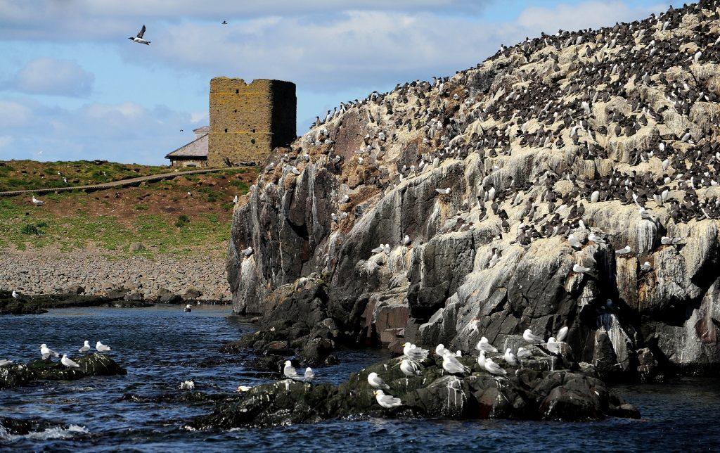 Avvicinamento alle scogliere tappezzate di uccelli marini