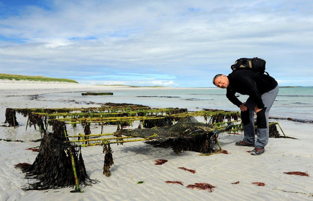 Allevamenti di ostriche lungo la spiaggia