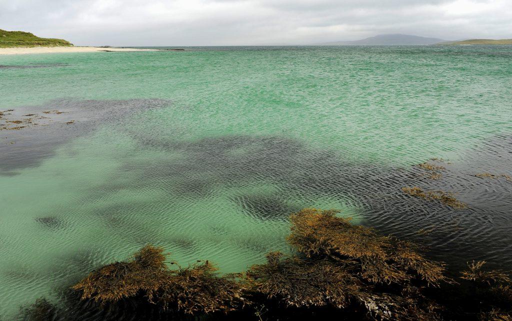 Acqua cristallina e alghe...