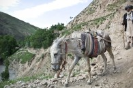 Another man traveling between two villages
