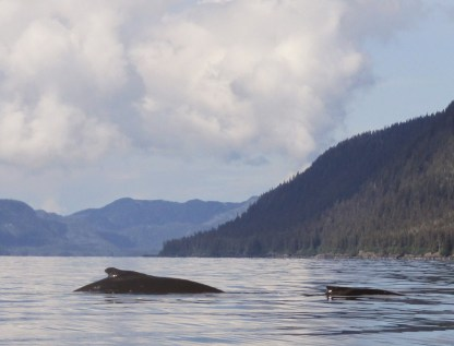 Humpback Whale mama & calf