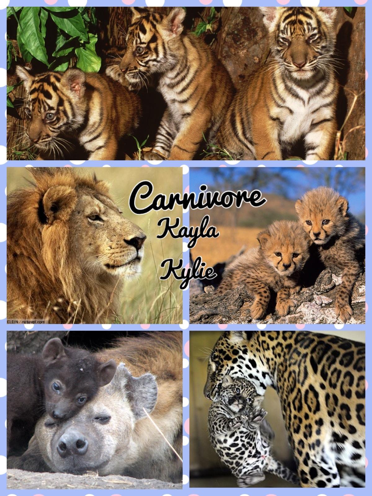 Carnivore Herbivore Omnivore Oh My The Ilesson Lady
