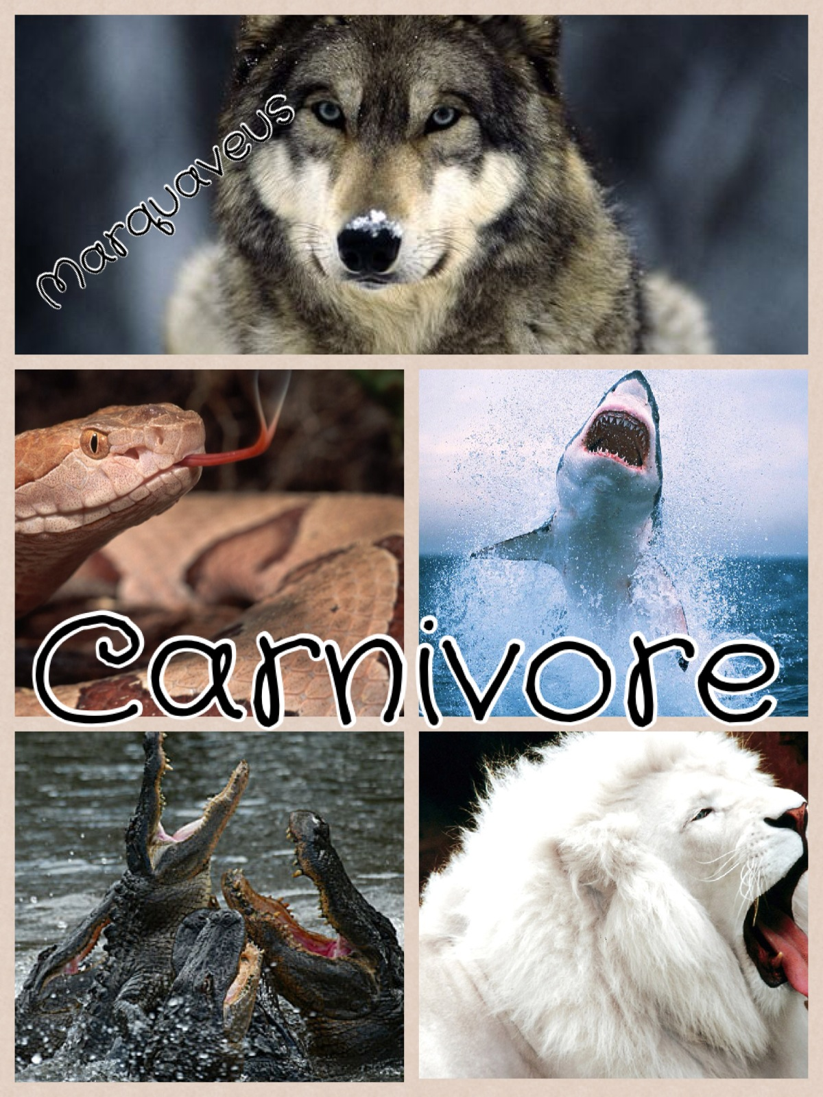 Carnivore Herbivore Omnivore Oh My The Ilesson Lady