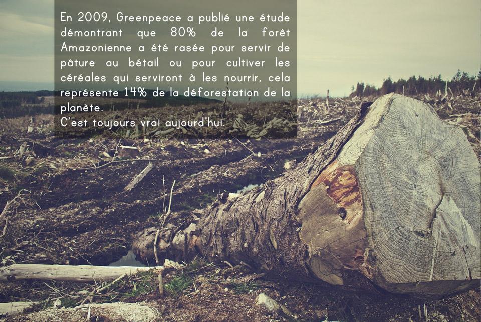 Deforestation amazonie