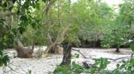 La foresta di mangrovie