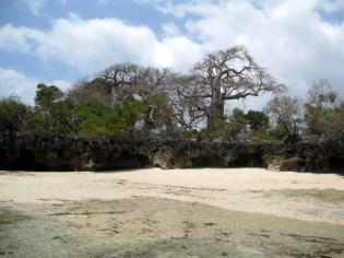 baobab a ridosso della spiaggia