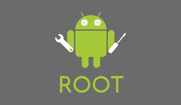 root nədir