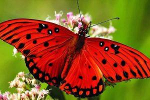 ciri ciri kupu kupu