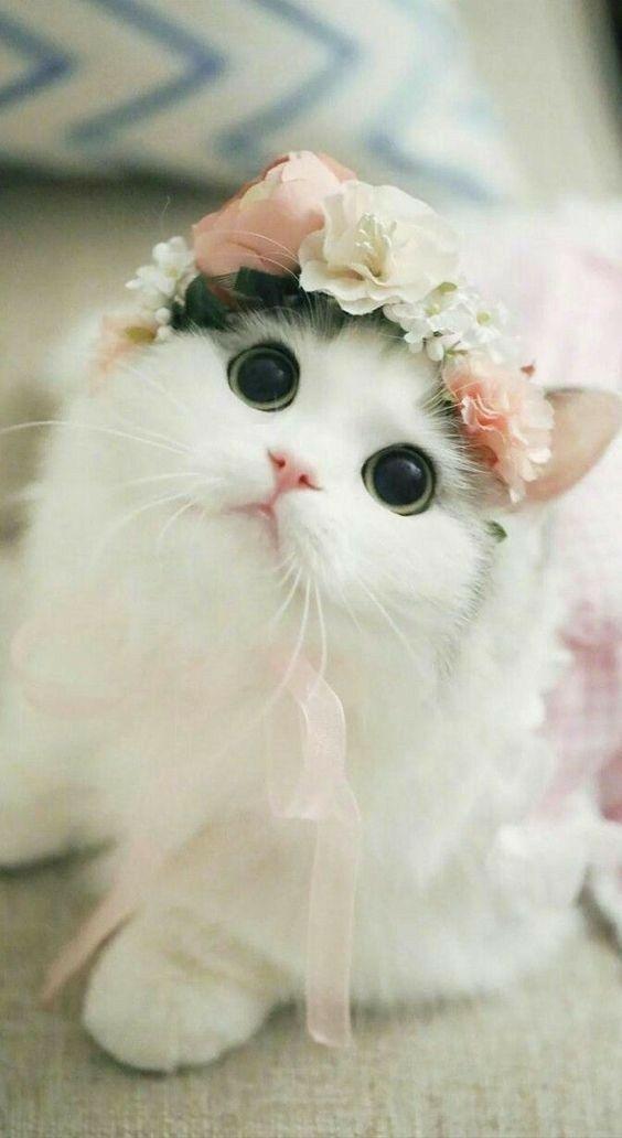 صور وخلفيات قطط صغيرة جميلة مناسبة للجوال لحن الحياة