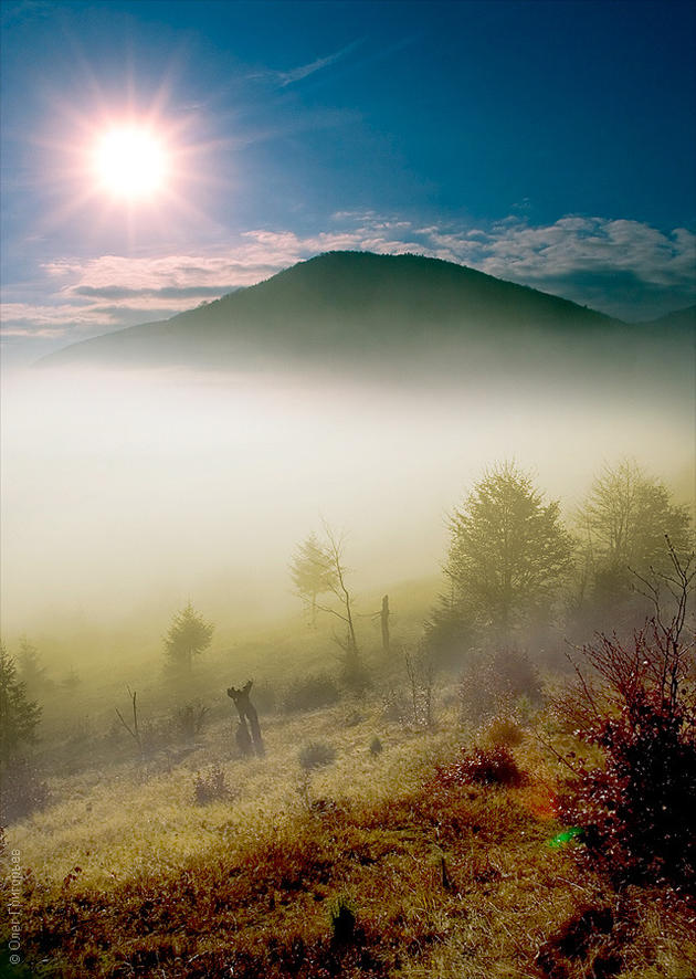 Fog isn't a rare sight here due to the very moist conditions. Carpathian Mountains, Ukraine