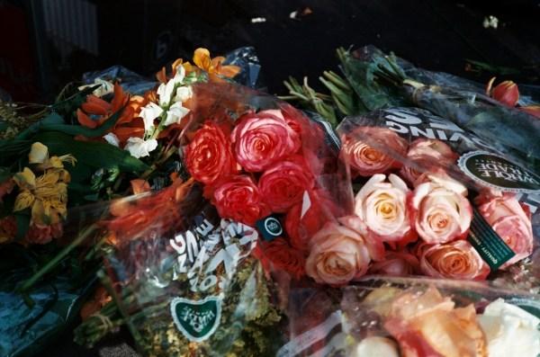 andrew volk flowers