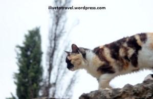 Cats of Bosnia and Herzegovina
