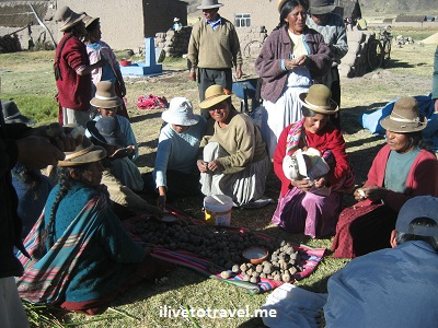 Locals preparing roasted potatoes in Azángaro, Perú