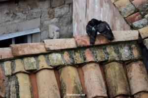Photo of the Week – Lovers in Dubrovnik