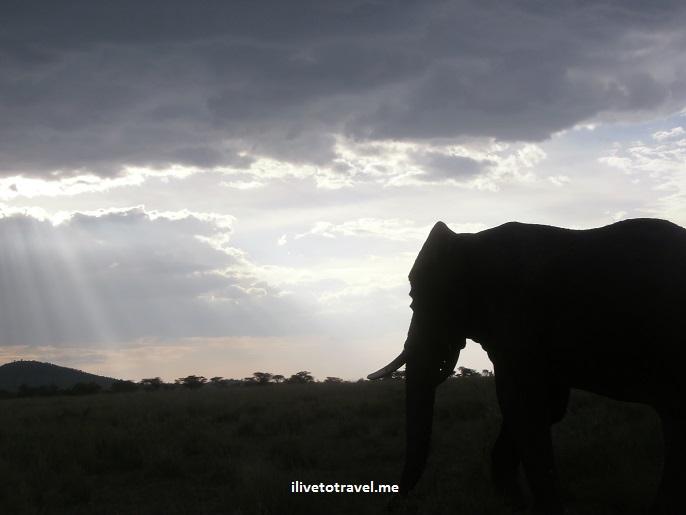Safari, Serengeti, Tanzania, wildlife, animls, elephant, outdoors, nature, photo, Olympus, sunset