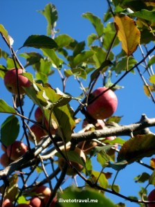 Apple, picking, mountains, fall, red, photo, Canon EOS Rebel, outdoors, nature