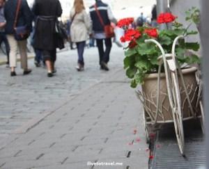Tallinn, Estonia, charming, Canon EOS Rebel, photo, Reval, Baltic, medieval, city, architecture, history, flowers