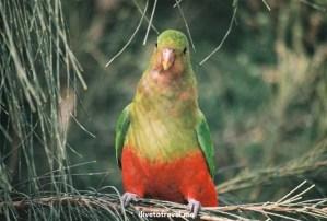bird, Australia, Melbourne, Great Ocean Road, wildlife, tour,