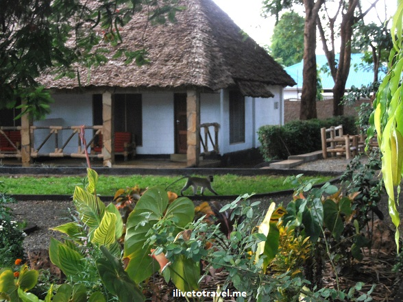 Honey Badger Lodge,Moshi, Tanzania, Kilimanjaro, lodging, hotel, travel, photo, Olympus